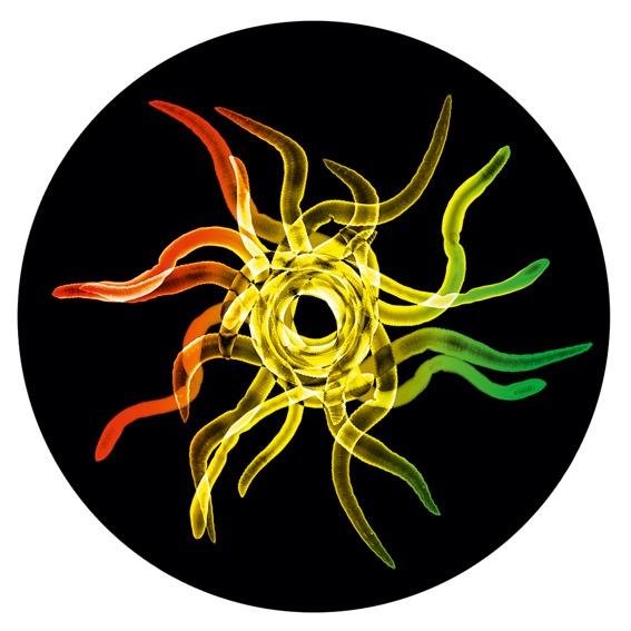 Irie Ites vinyl-single: Earlyworm – Journal Entry/Dub Gardeners Guide