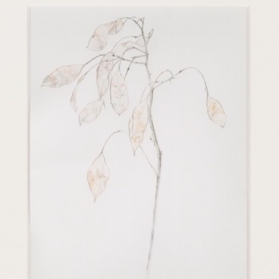 Kunstdrucke - zarte Pflanzenzeichnungen für die Seele
