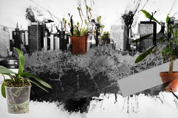 Urban Plants – Bio-Biografien