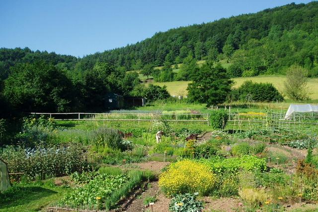 Kinder erleben die bunte Vielfalt der Nutzpflanzen