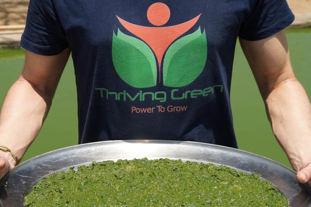 Thriving Green - Überleben mit Superfood
