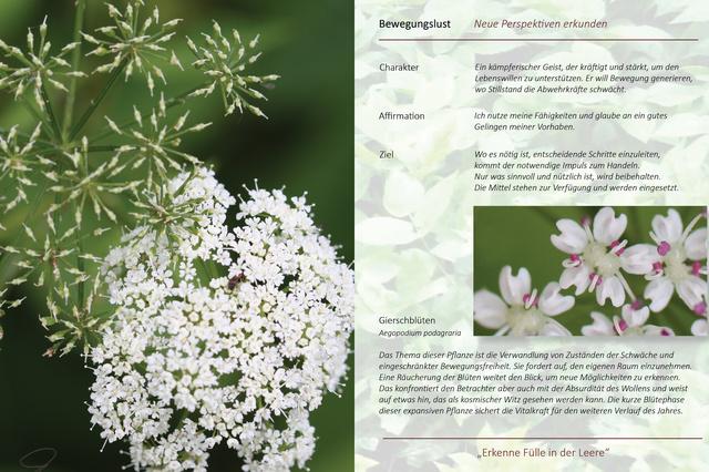 Berührende Einblicke in die Pflanzenwelt
