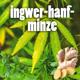 "5L Bio-Eisteekonzentrat (1:5) ""Ingwer-Hanf-Minze"" incl. sexy Crowdfundingpackage!"