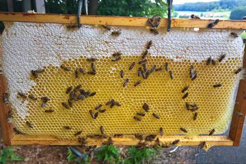 Regionaler Honig für den Bienenerhalt