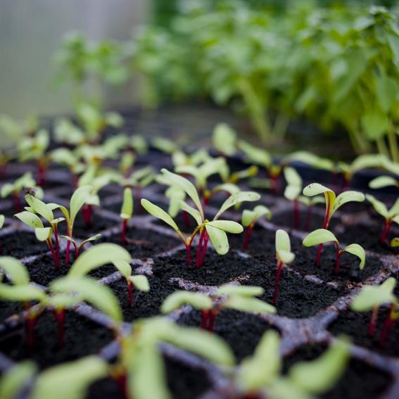 Seltenes Saatgut - Pflanzen-Sorten für den eigenen Garten