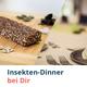 Insekten-Dinner bei Dir!