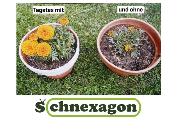 Schnexagon - Antihaftende Schneckenabwehr