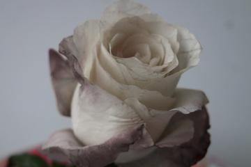 """Plakat-Aktion """"75. Weiße Rose"""""""