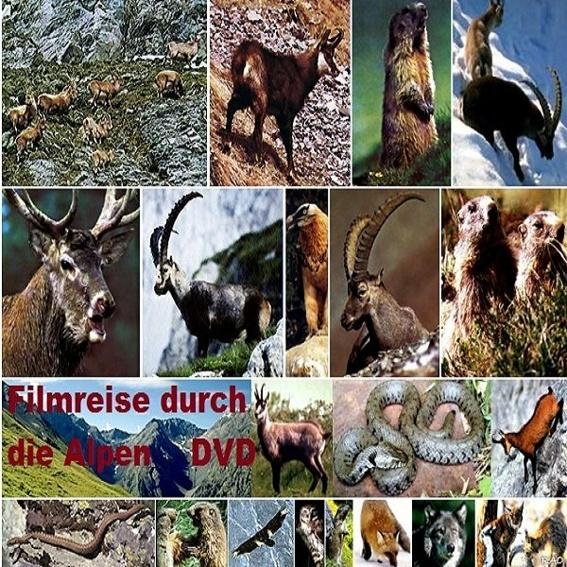 DVD  Filmreise durch die Alpen
