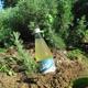 Pedacola-Sirup Liter-Flasche