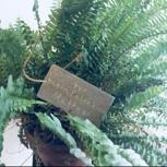 Pflanzen-Patenschaft