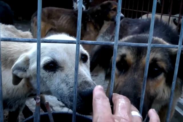 Hundeleben - Ein Film über das Schicksal rumänischer Straßenhunde