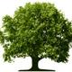 Wir pflanzen 1 Baum für Dich + 100 Bonets