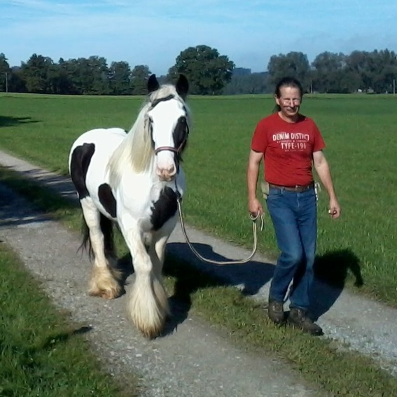 Spaziergang mit einem Pony