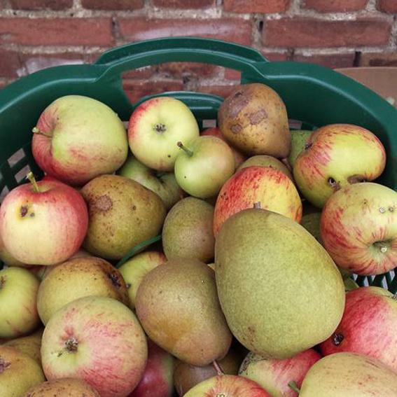 Ein Wochenende zur Apfelernte in Battin