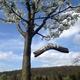 Ein Baum, speziell für Dich!