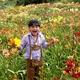 Taglilien 10 verschiedene Sorten