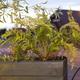 Farn im Topf (Topfpflanze) + Gedichtpostkarte