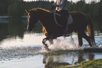 HoppiHolidays, das Portal für Reiterurlaub!