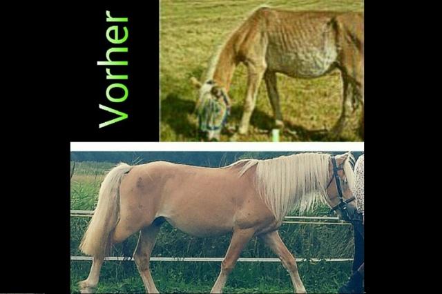 Tierhilfe Bärchen - mehr als eine Tierhilfe