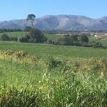Eine Woche Urlaub in einer Mallorquinischen Cassita