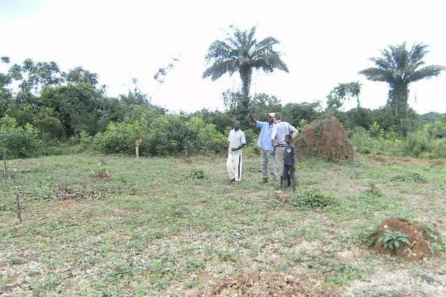Moringa Farm-Genossenschaft in West-Afrika