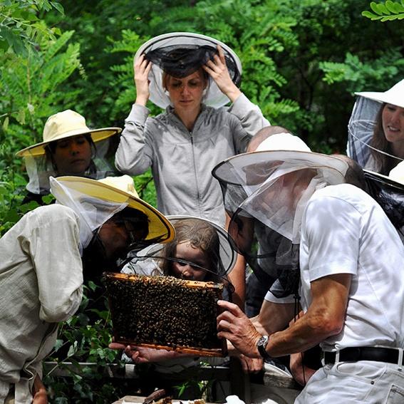 Urban Bee Workshop Series