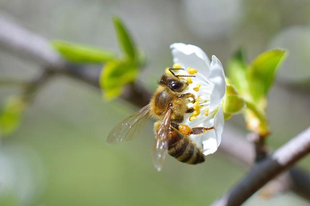 nearBees - Honig von Nebenan