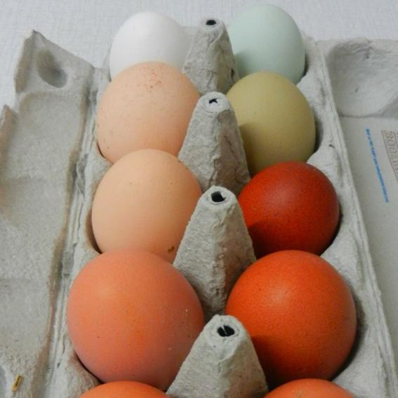 10 gefärbte oder ungefärbe gekochte Eier unserer glücklichen Hühner