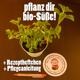 Echte Bio-Steviapflanze mit Rezeptheftchen und Pflegetipps (incl. Versand)