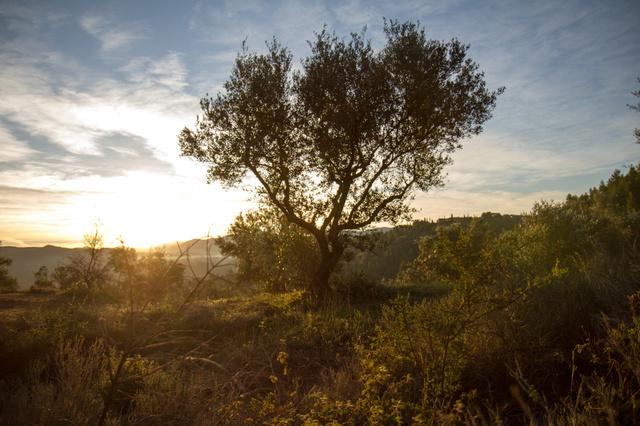 Faires Olivenöl aus Griechenland