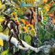 VORBESTELLUNG des 2. KARABA Vinylalbums
