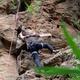 Schnupper-Kletter-Abenteuer
