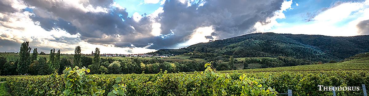 Ökologische Weinbergsfläche