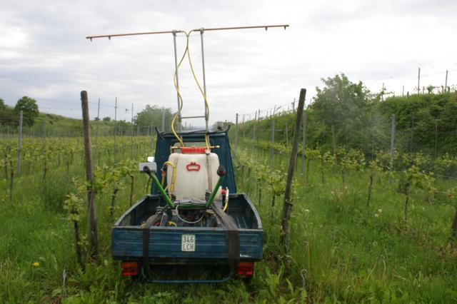 Wein aus permakulturellem Anbau