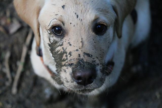 Indoor Training Center für mehr Hundeglück