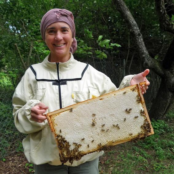 1 honiggefüllte Bienenwabe