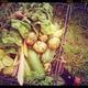 Eine Tüte Lokal-Gemüse