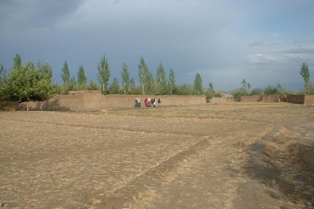 100 Bäume für Afghanistan