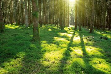 STANDING MAT – Ich glaub', ich steh im Wald