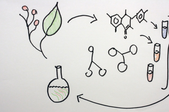 Phytobiotika