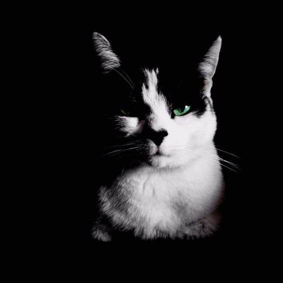 kunst: katzenfoto groß mit rahmen und songzitat