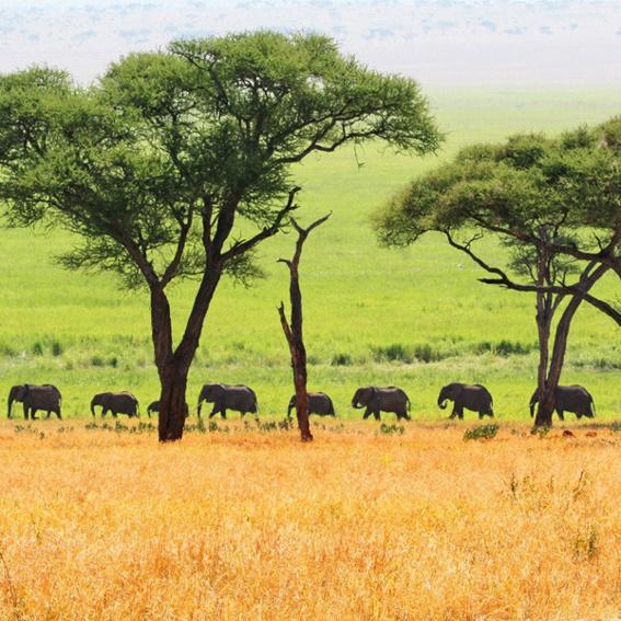 Postkarte aus Tansania