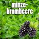 5L Bio-Eisteekonzentrat (1:5) 'Minze-Brombeere'