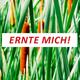 Typha-Erntehelfer-Paket