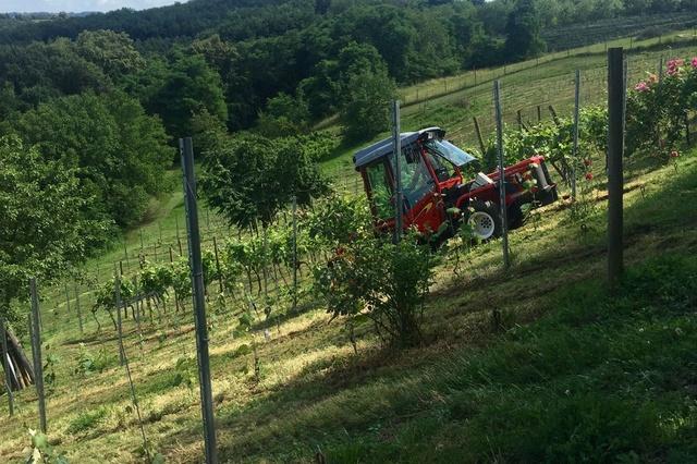 Mein Weinkräutergarten