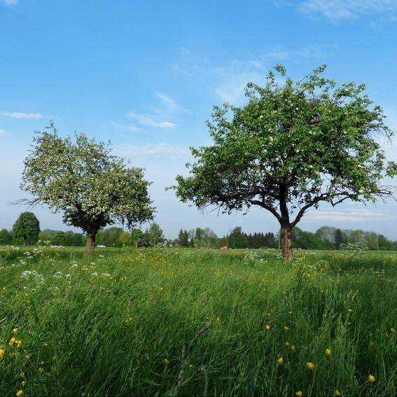 Baum-Patenschaft