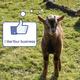 Ziegen-Reklame für dich