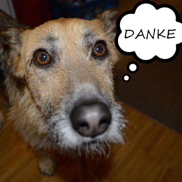Grüner Hund Handbuch Für Nachhaltiges Hundeleben