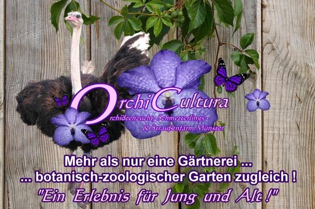 OrchiCultura - ...mehr als nur eine Gärtnerei